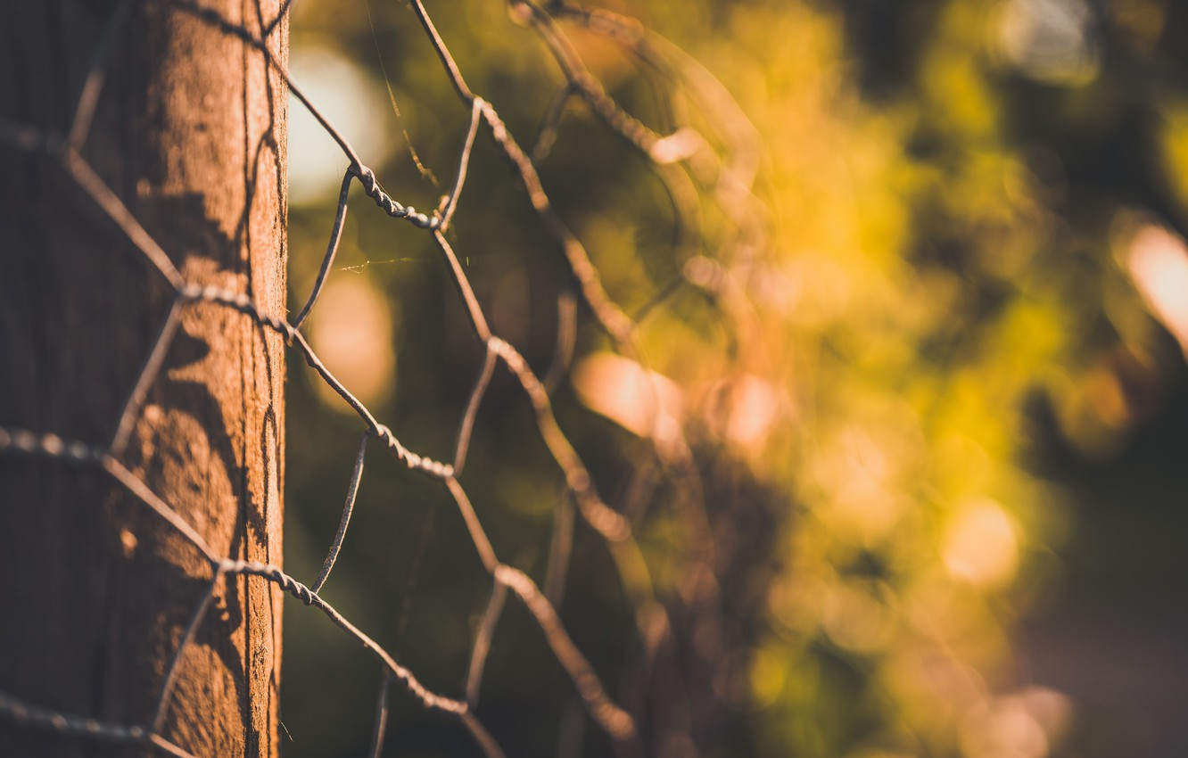 Photo wallpaper macro, background, the fence