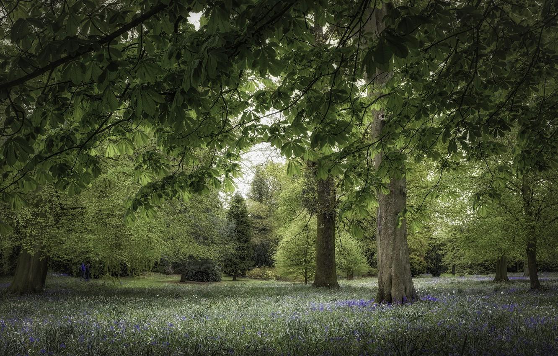 Photo wallpaper trees, Park, chestnut
