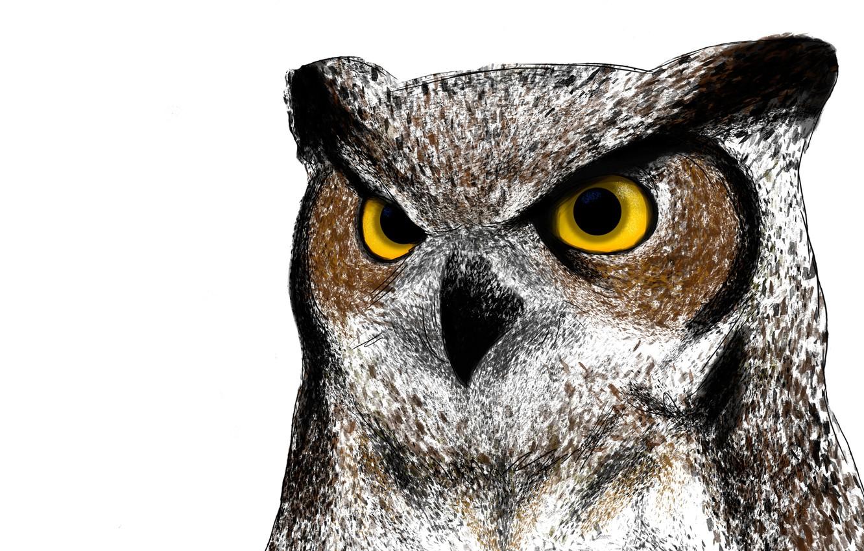 Photo wallpaper owl, bird, painting, owl