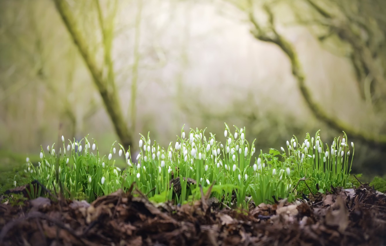 Photo wallpaper forest, flowers, nature, spring