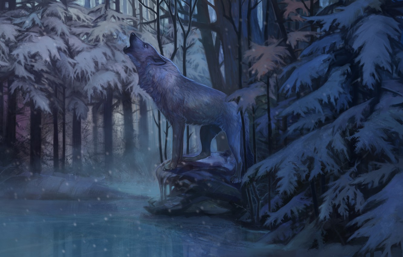 Wallpaper Cold Winter Loneliness Wolf Ice Predator
