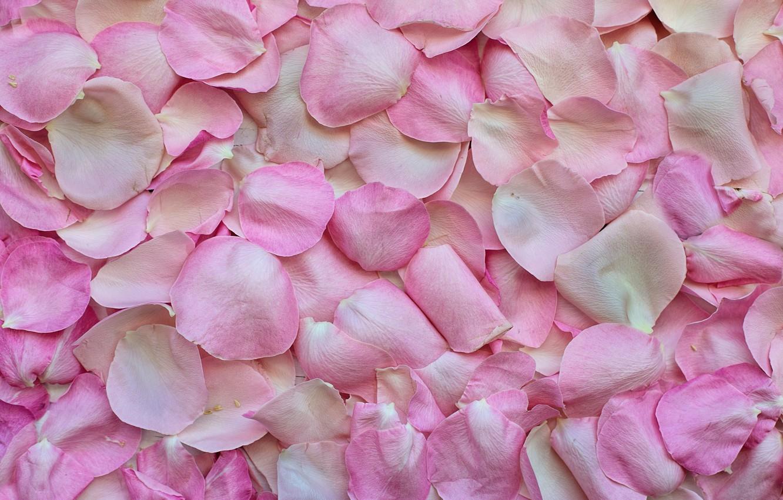 Photo wallpaper flowers, roses, petals, Texture