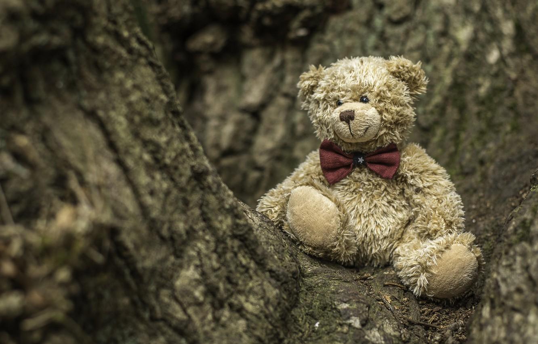 Photo wallpaper tree, toy, bear, bear, Teddy bear
