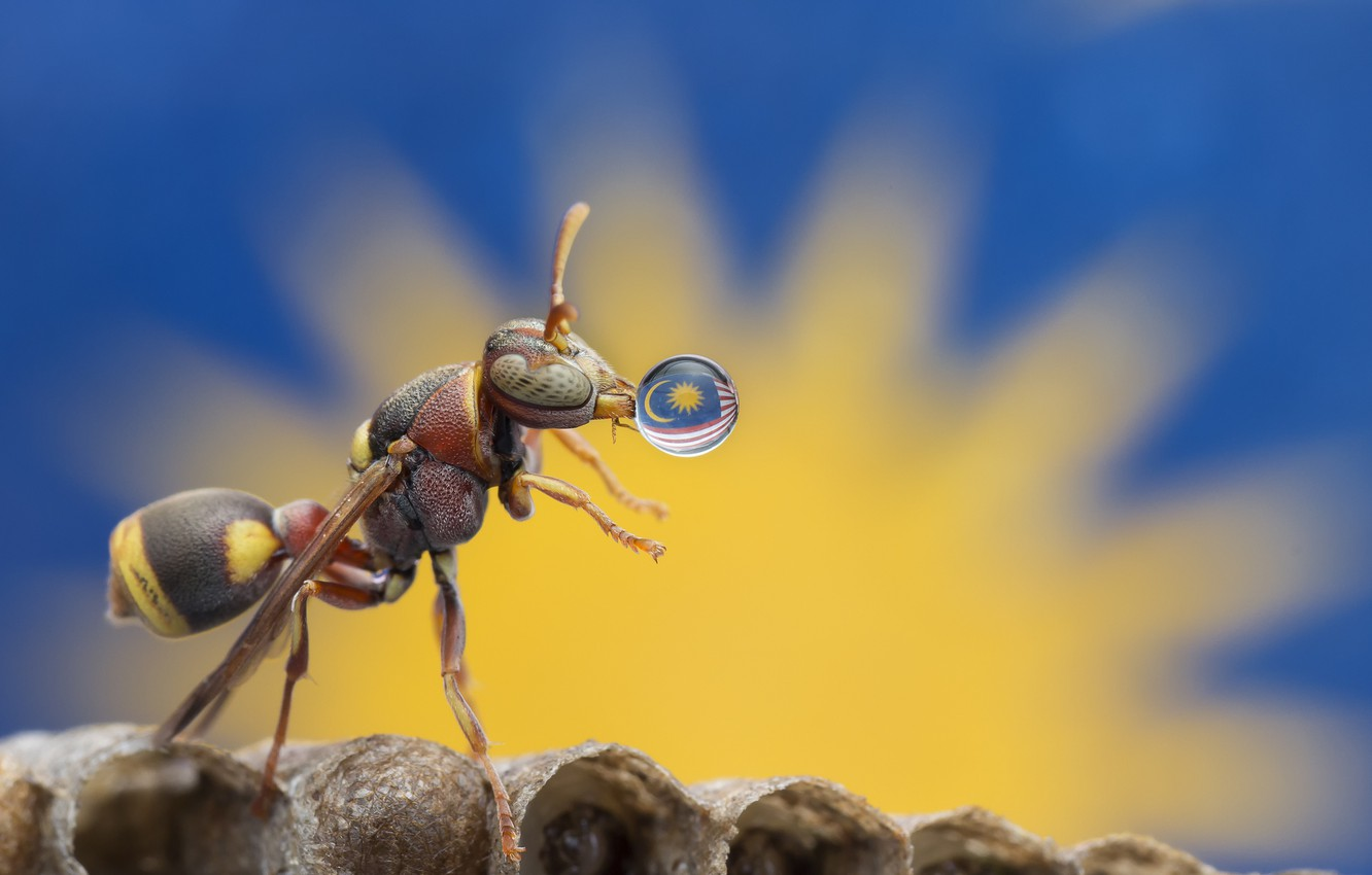Photo wallpaper macro, drop, flag, insect, ant