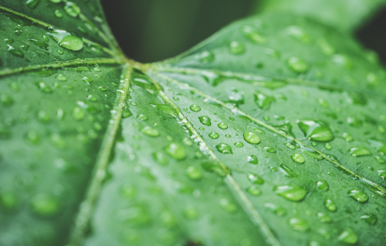 Photo wallpaper drops, sheet, green, rain