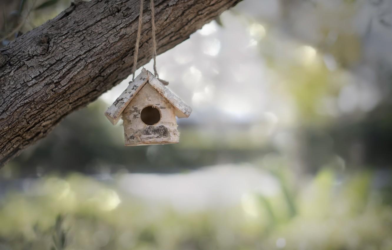 Photo wallpaper nature, tree, house