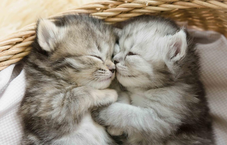 Photo wallpaper basket, sleep, kittens, kids