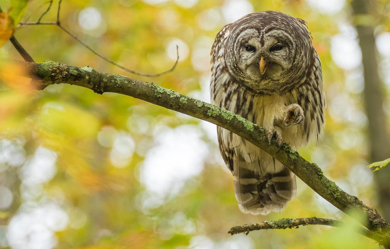 Photo wallpaper autumn, nature, owl, bird, branch, claws, yellow background, bokeh, motley