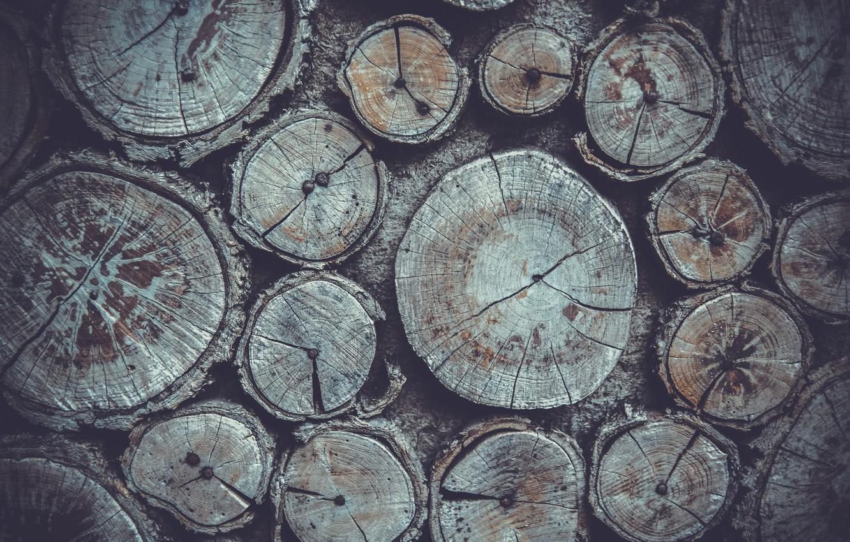 Photo wallpaper nature, tree, logs, wood, texture, nature, wood, texture, wood texture
