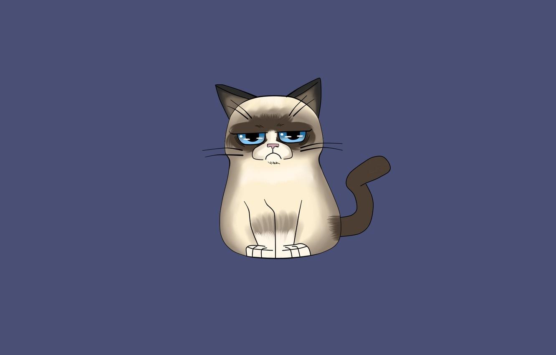 Photo wallpaper cat, cat, minimalism, grumpy cat, grumpy cat