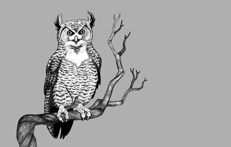 Photo wallpaper tree, owl, bird, branch, light background, owl
