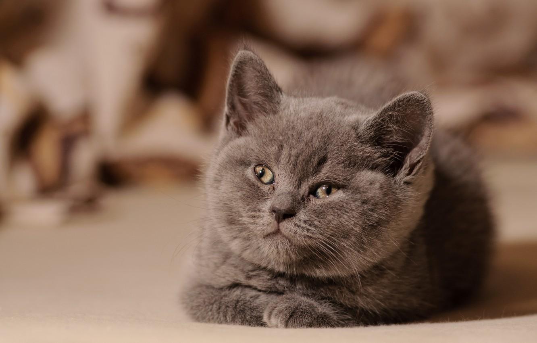 Photo wallpaper kitty, fluffy, looks
