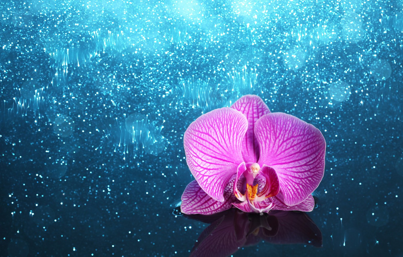 Photo wallpaper flower, Orchid, shiny background
