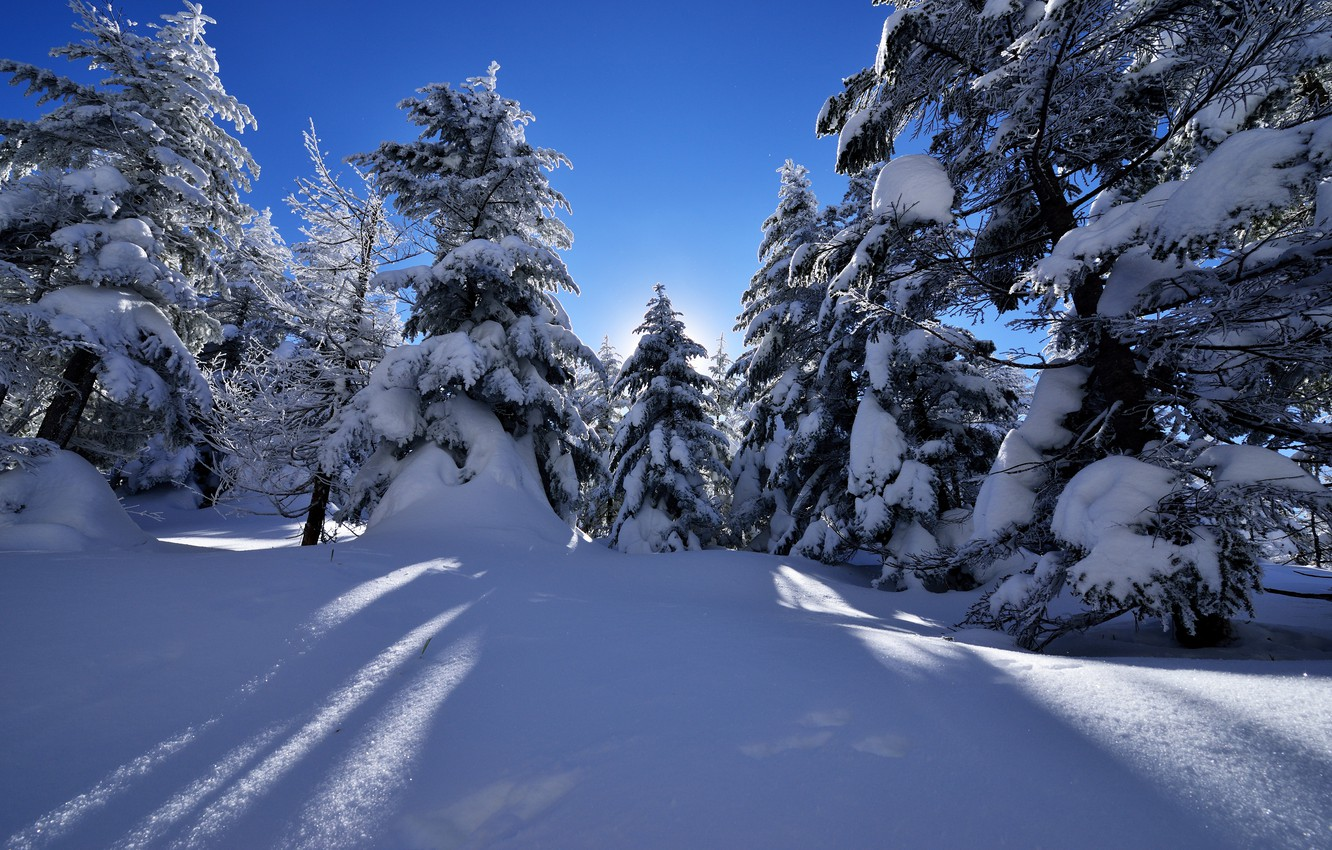 Photo wallpaper Nature, Winter, Snow, Spruce
