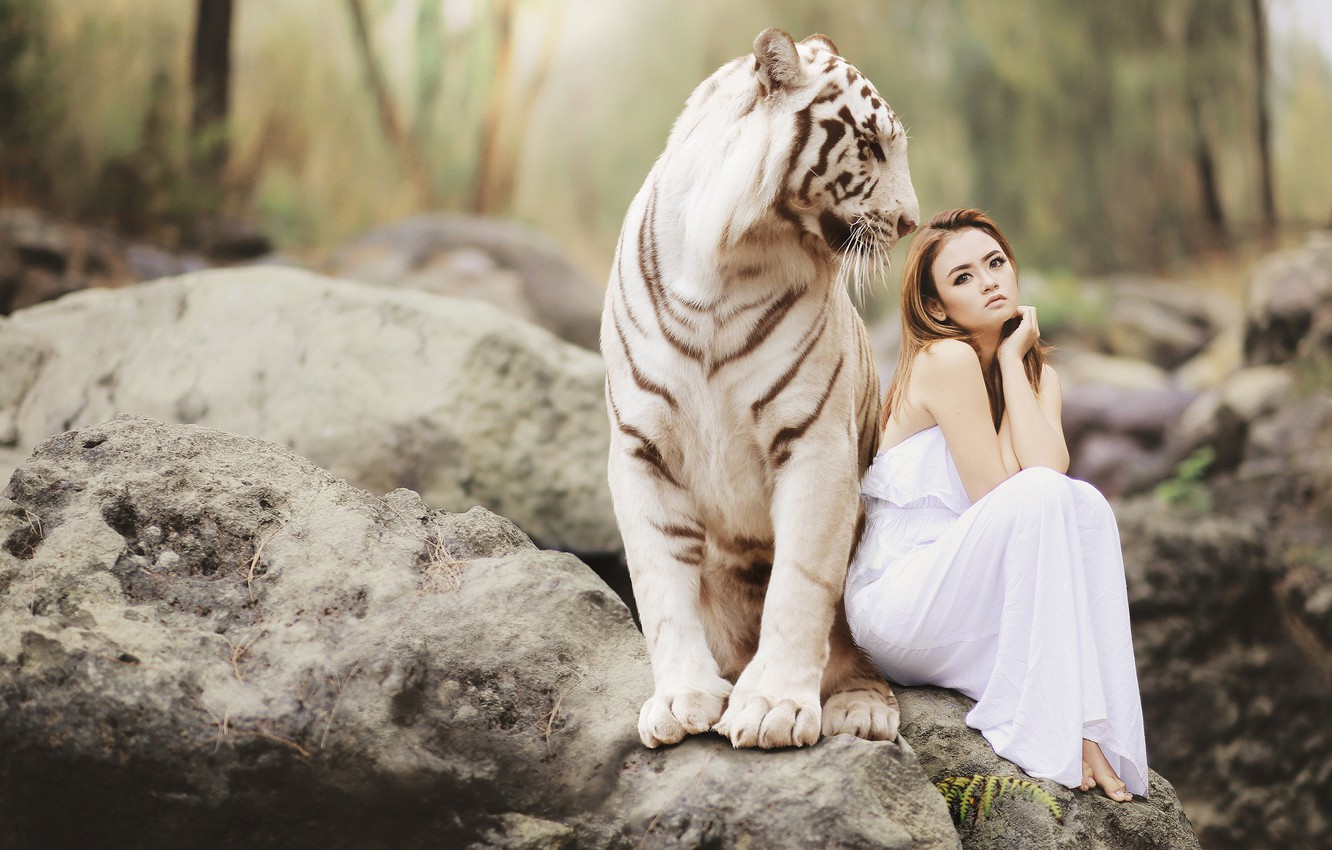 Photo wallpaper white, girl, nature, tiger, stones, mood, the situation, dress, friendship, Asian, sitting