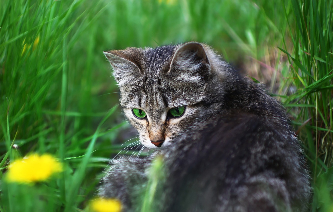 Photo wallpaper cat, look, weed, kitty