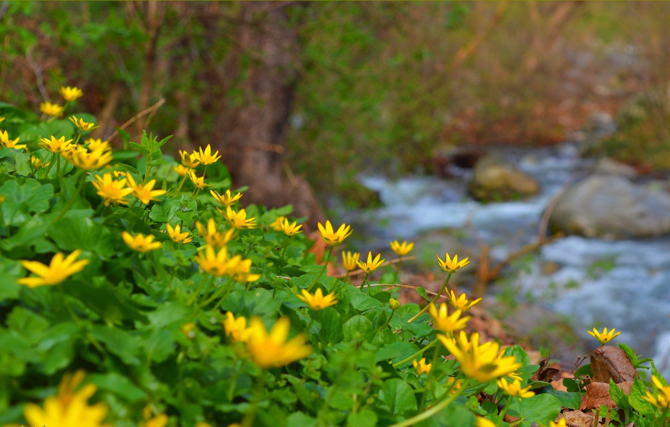 Photo wallpaper Nature, Spring, Stream, Nature, Spring, Yellow flowers, Yellow flowers, The Chistyakov, Buttercup spring