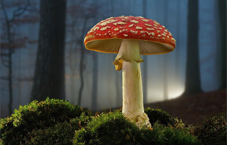 Photo wallpaper forest, mushroom, moss, mushroom