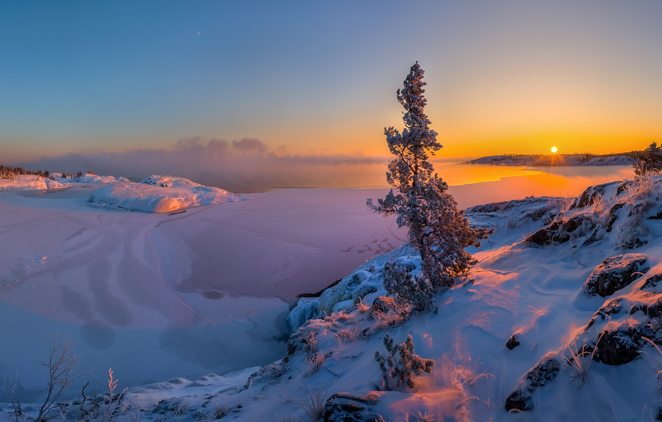 Photo wallpaper snow, winter, pine, tree, lake, Leningrad oblast, Lake Ladoga, ice, sunset