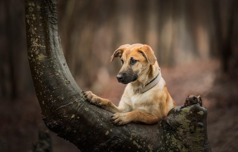 Photo wallpaper tree, dog, bokeh