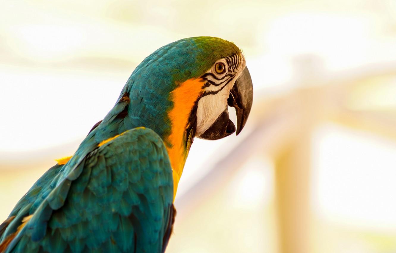 Photo wallpaper bird, beak, parrot, Ara