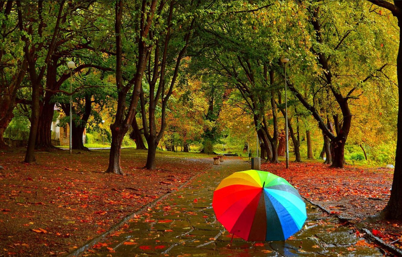 osen park zontik autumn fall umbrela colors
