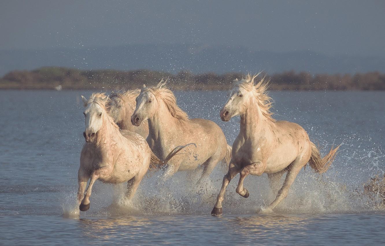 Photo wallpaper water, squirt, horses, horse, running