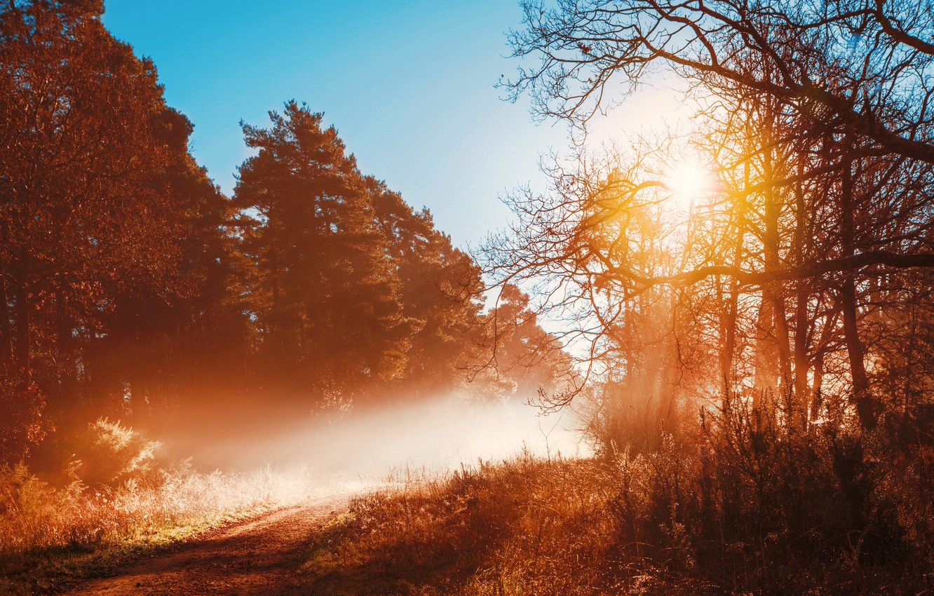 Photo wallpaper road, autumn, forest, trees, fog, morning
