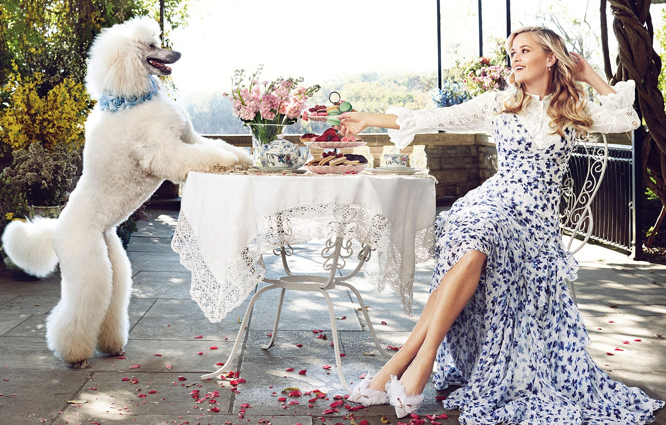 Photo wallpaper white, flowers, smile, food, dog, makeup, garden, dress, hairstyle, blonde, shoes, sitting, poodle, rose petals, …