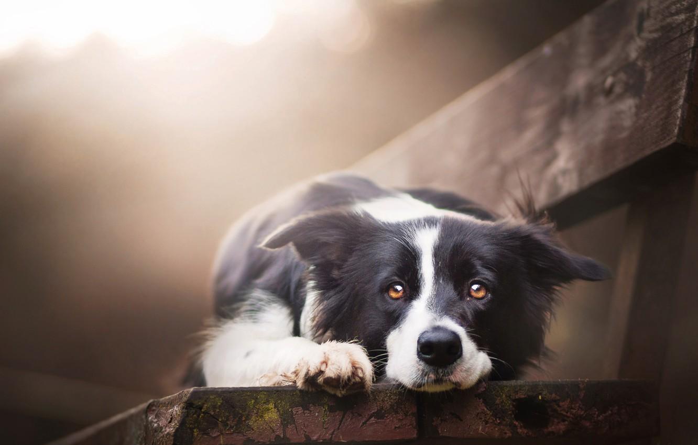 Photo wallpaper look, each, dog, bench