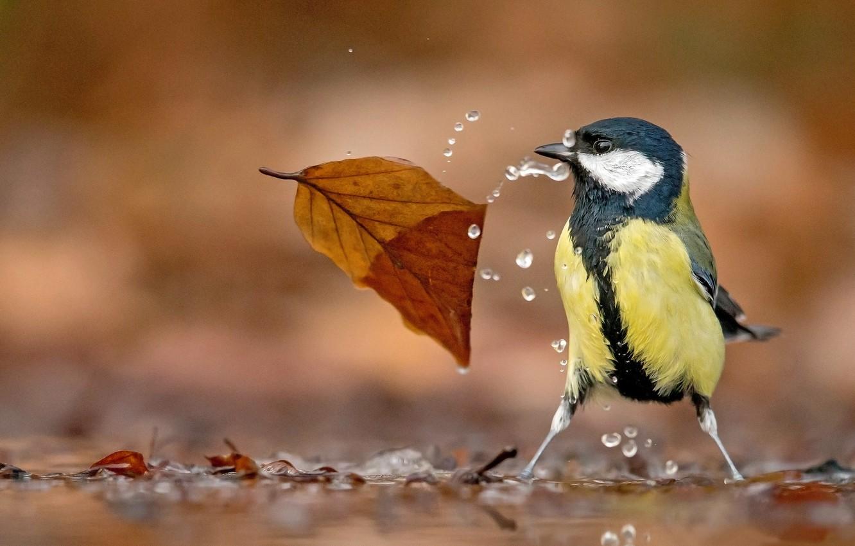 Photo wallpaper water, drops, bird, leaf, bokeh, Tit