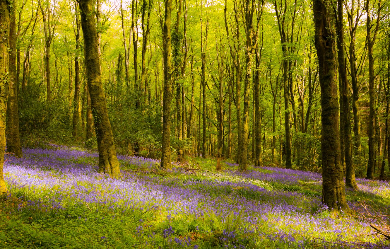 Photo wallpaper forest, trees, flowers, Ireland
