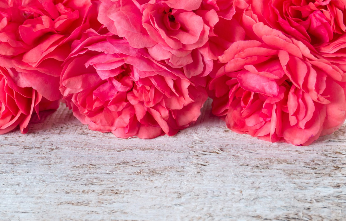Photo wallpaper flowers, pink, pink, flowers, peonies, peonies