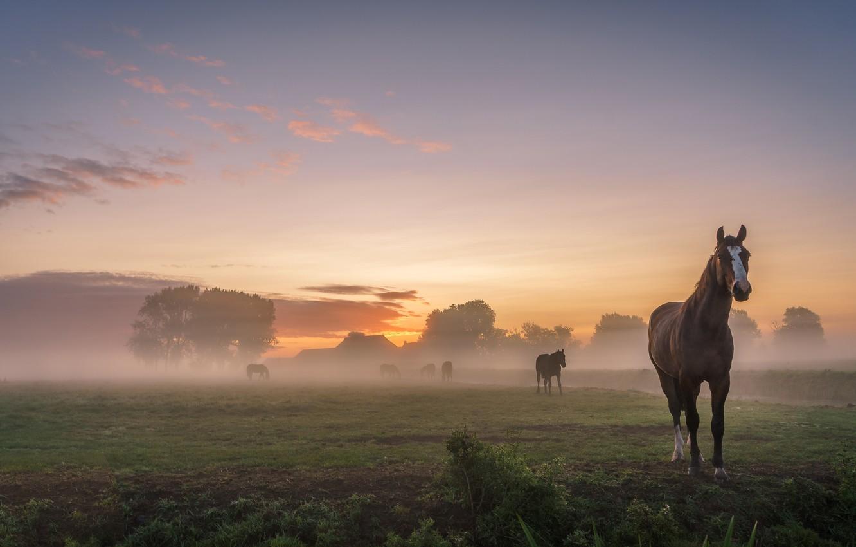 Photo wallpaper field, summer, the sky, landscape, nature, fog, dawn, horses, morning, village, horse, pasture, houses