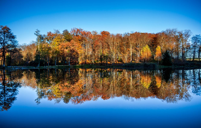 Photo wallpaper lake, mirror, woodland