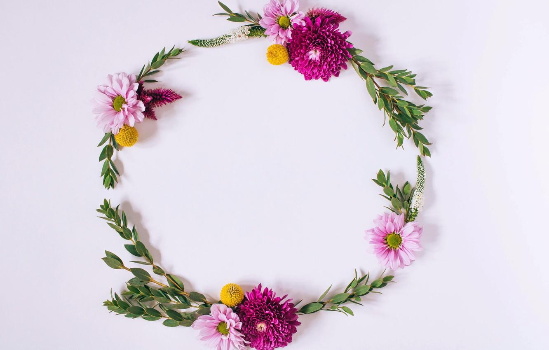 Photo wallpaper flowers, chrysanthemum, pink, flowers, background, frame, floral