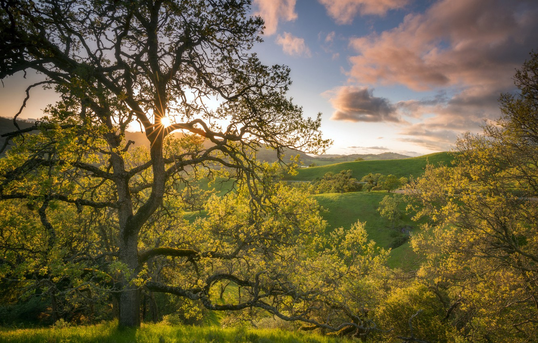 Photo wallpaper the sky, trees, hills, CA