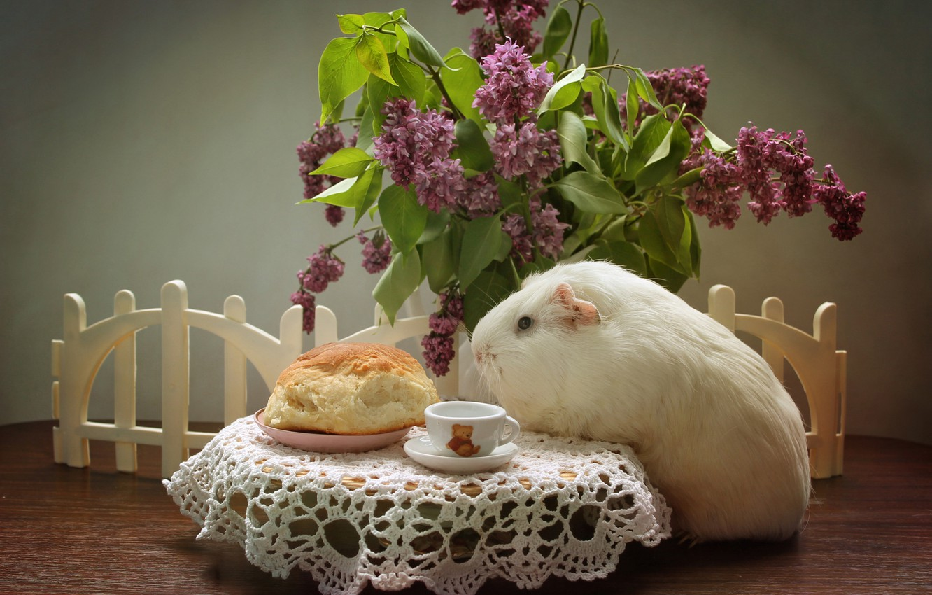 Photo wallpaper animals, spring, may, cakes, lilac, pig, composition, bun, Guinea pigs, country history