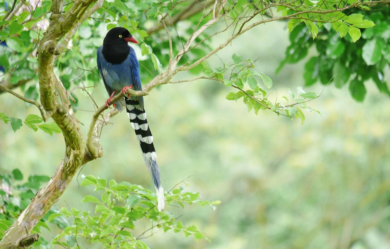 Photo wallpaper tree, bird, tail, bright
