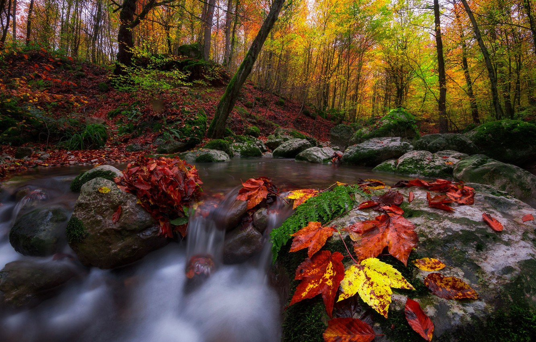 Photo wallpaper autumn, forest, leaves, trees, landscape, nature, stream, stones