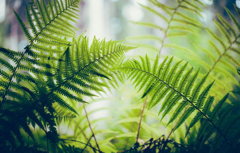 Photo wallpaper leaves, macro, fern