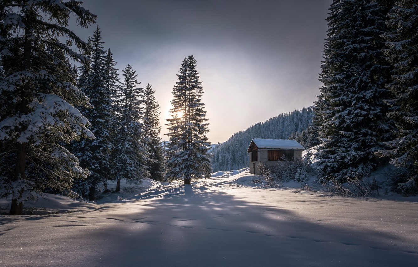 Photo wallpaper winter, forest, nature, morning
