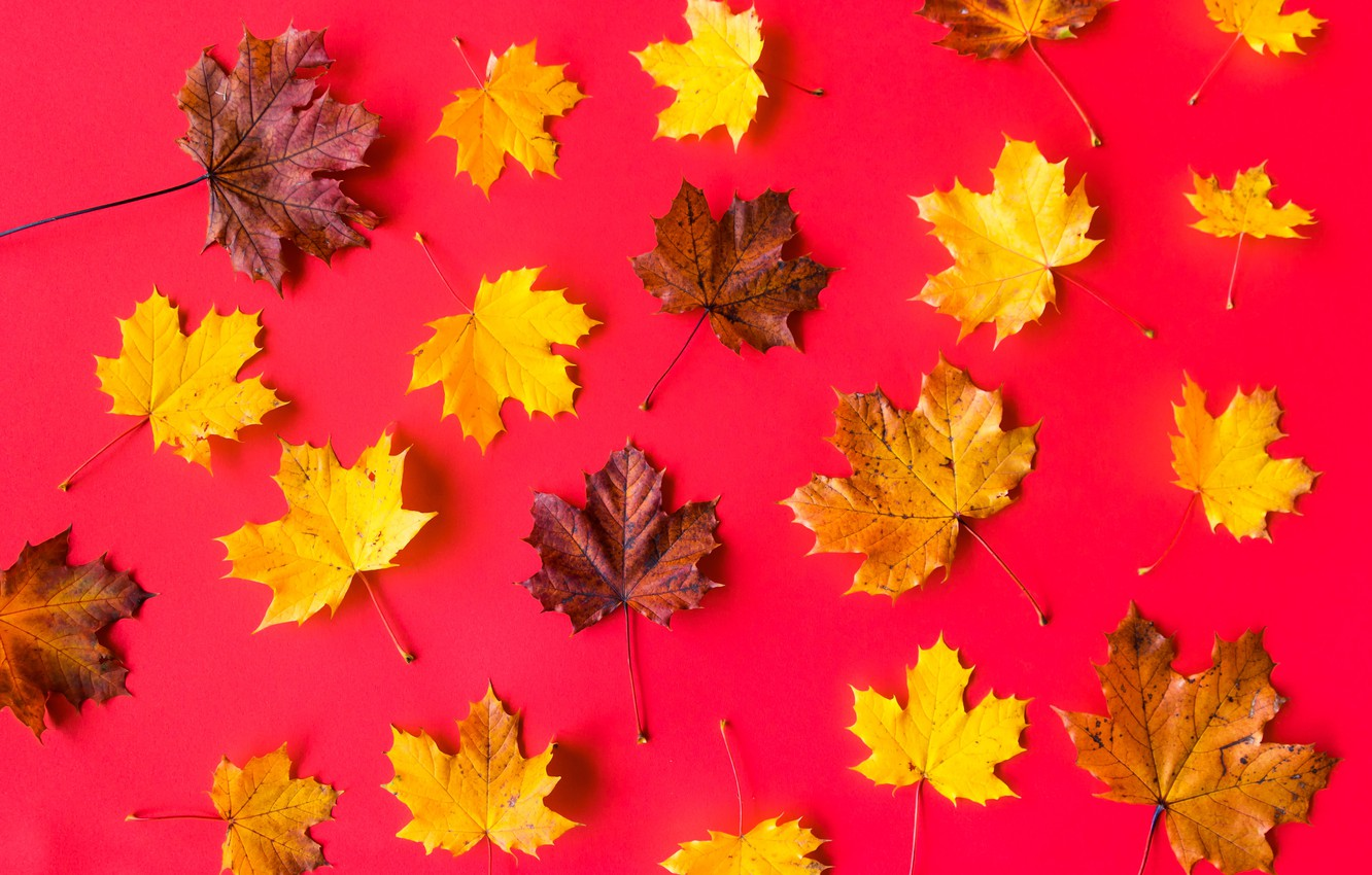 Photo wallpaper leaves, background, maple