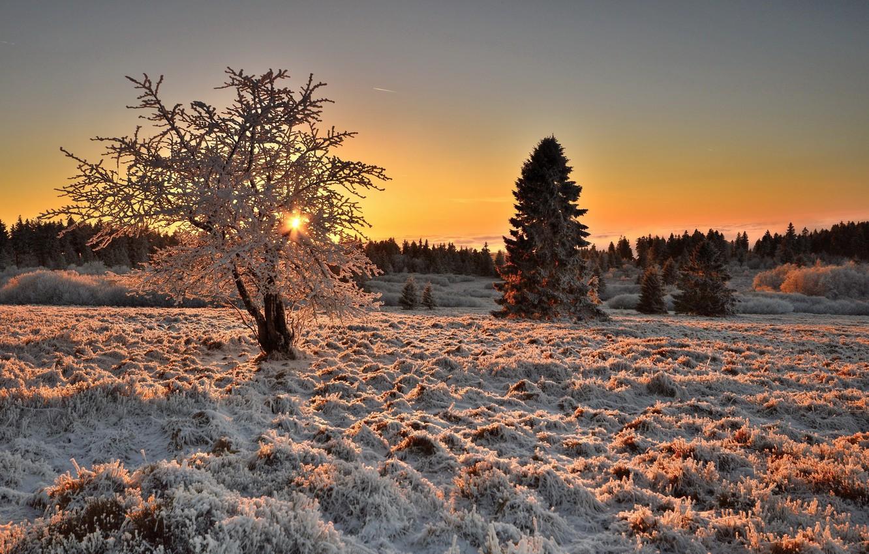 Photo wallpaper winter, frost, field, nature, tree, morning