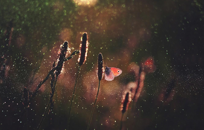 Photo wallpaper grass, drops, macro, light, butterfly, glare, butterfly, bokeh