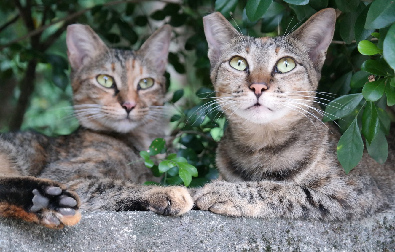 Photo wallpaper nature, stay, cats, pair