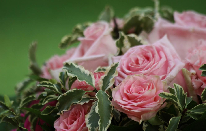 Photo wallpaper macro, roses, bouquet, pink