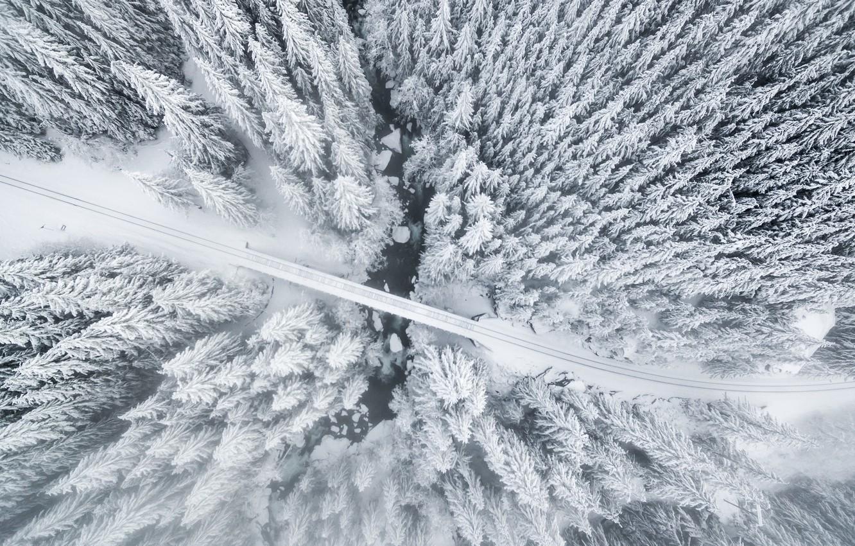 Photo wallpaper winter, forest, trees, bridge, nature, river