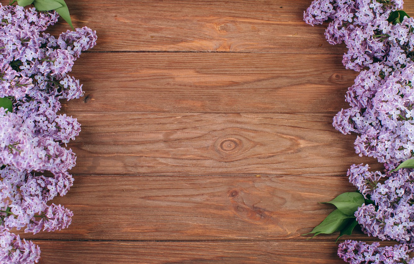 Photo wallpaper flowers, branches, spring, flowering, wood, blossom, flowers, lilac, spring, violet, lilac