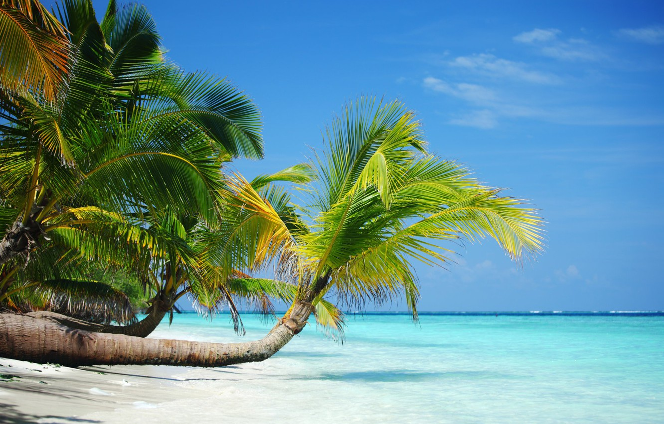 Photo wallpaper sand, beach, summer, tropics, palm trees, stay, shore